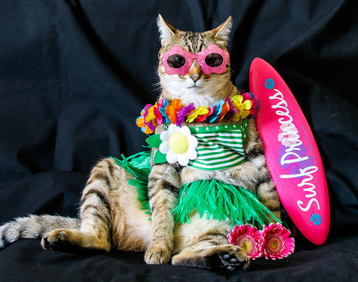 The Best Dressed Cat On The Internet