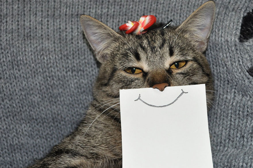 -paper cat-facial-expressions-montage-4