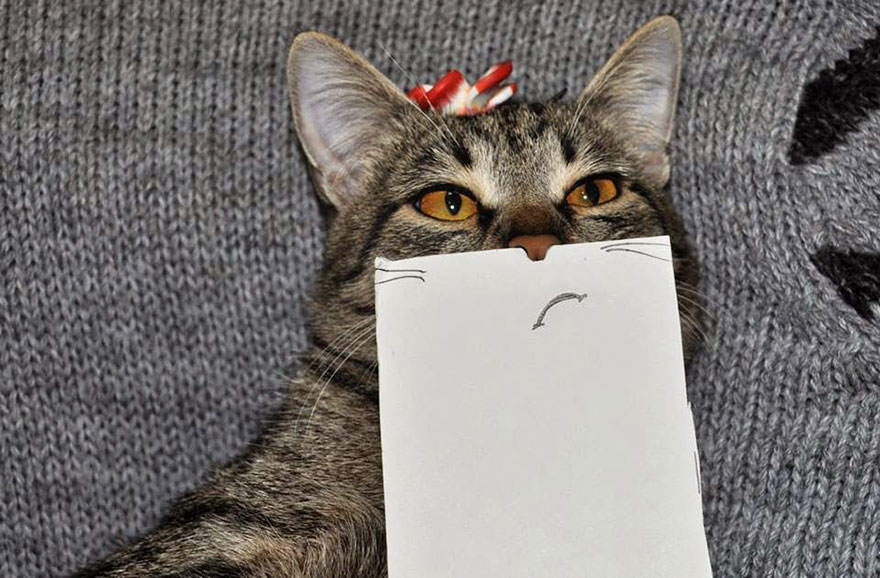 -paper cat-facial-expressions-montage-7