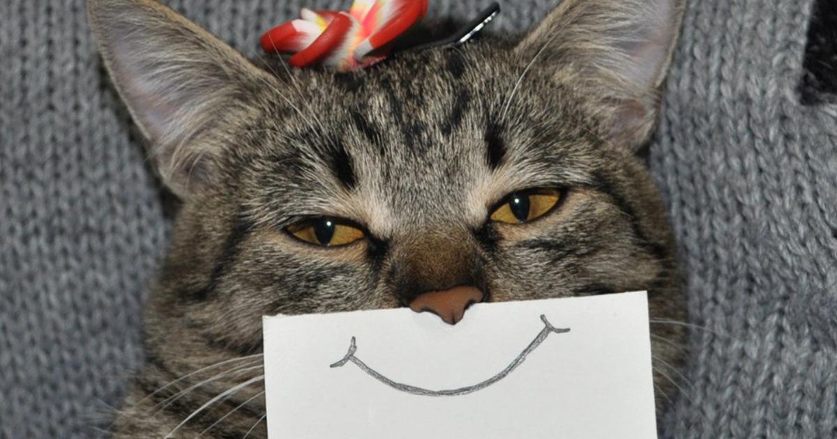 Bored cat