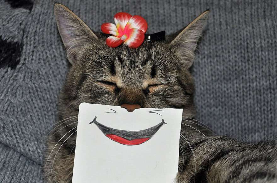cat-paper-facial-expressions-montage