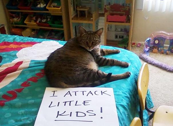 Cat Shaming