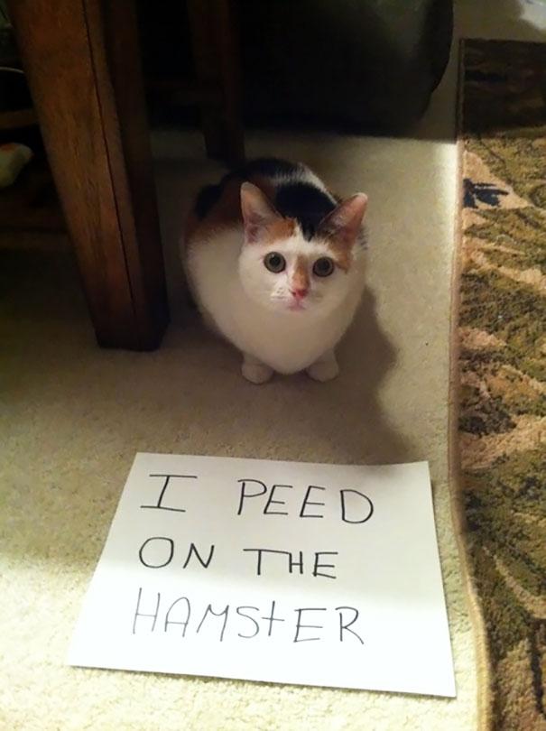 cat-shaming-15__605
