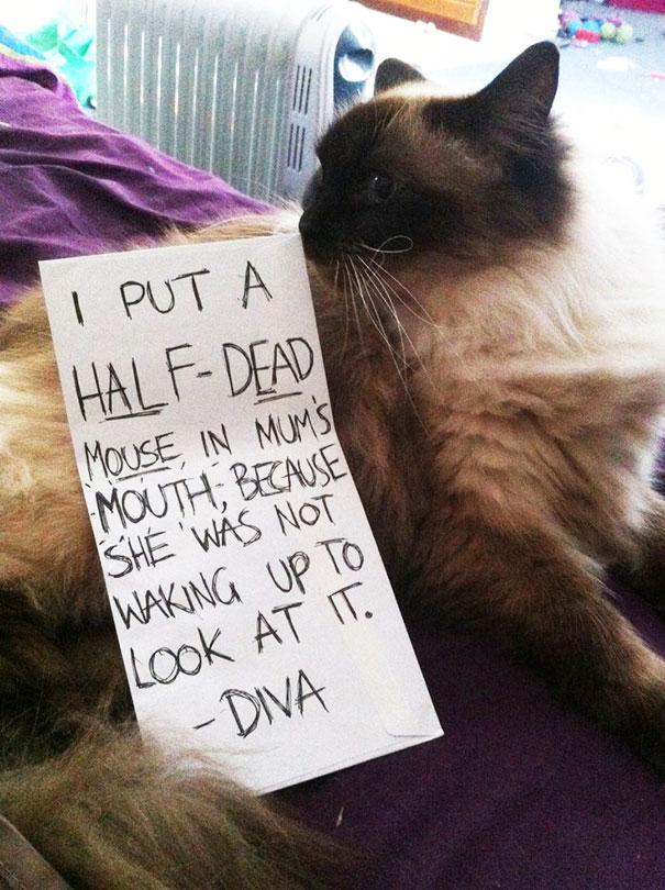 cat-shaming-19__605