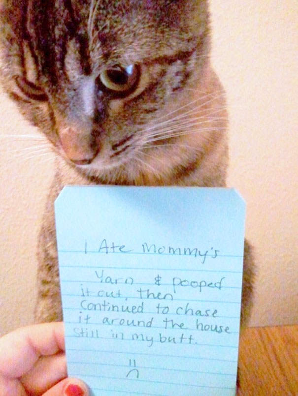 Asshole Cats Being Shamed For Their Crimes Bored Panda - 31 photos that prove cats are actually assholes