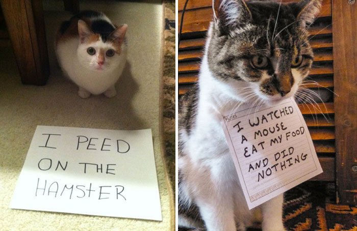 114 Asshole Cats Being Shamed For Their Crimes