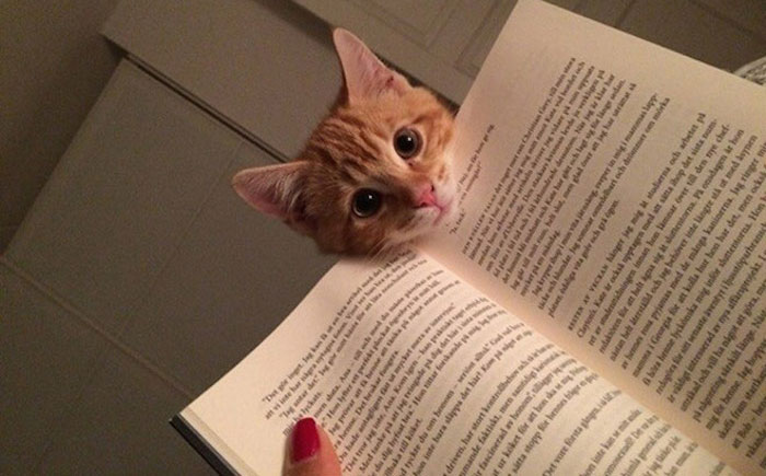 249 Cats That Need Your Attention The Exact Moment You Start Reading