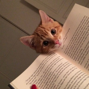 20+ Cats That Need Your Attention The Exact Moment You Start Reading