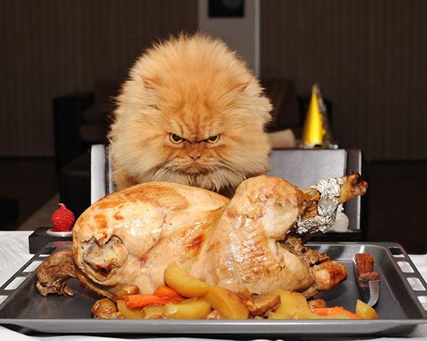 Cats That Secretly Plotting To Kill You