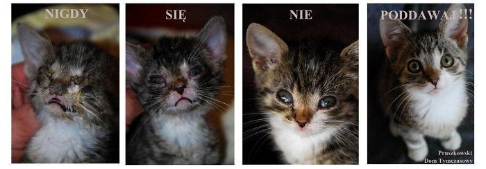 """nigdy Się Nie Poodawaj"" - ""never Give Up."" / Little Polish Rescue Cat"