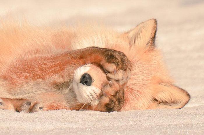 かわいい-動物 - 北海道 - エゾ日本-11 北海道に住んでいる可愛い動物達 ( 北海道 )
