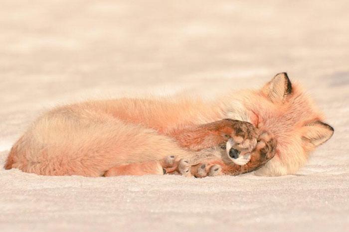 cute-animals-hokkaido-ezo-japan-12