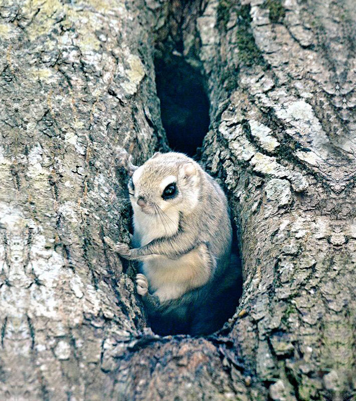 cute-animals-hokkaido-ezo-japan-14
