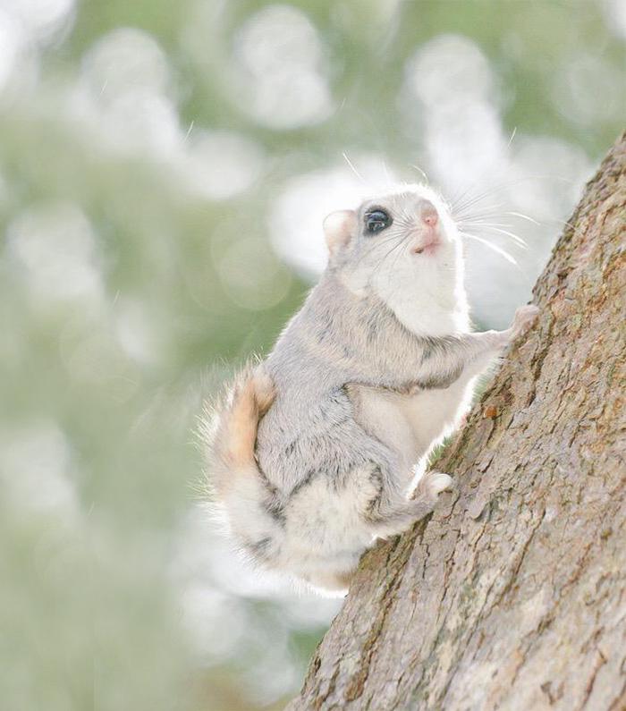 cute-animals-hokkaido-ezo-japan-21