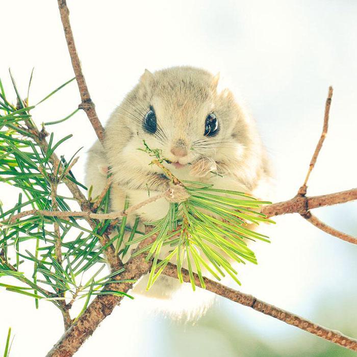 Cute-жовтня-Хоккайдо езо-Японія-3