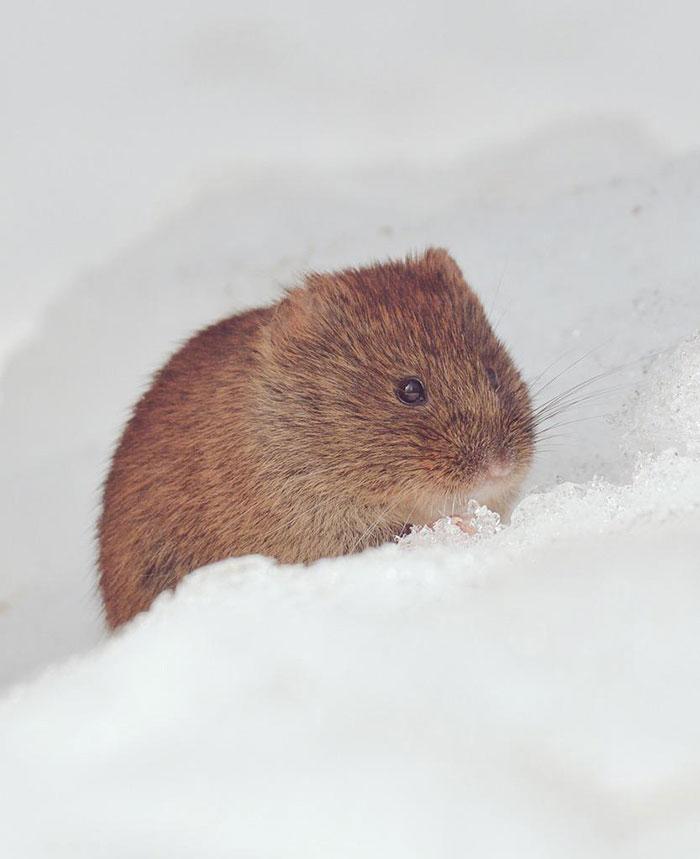 cute-animals-hokkaido-ezo-japan-32