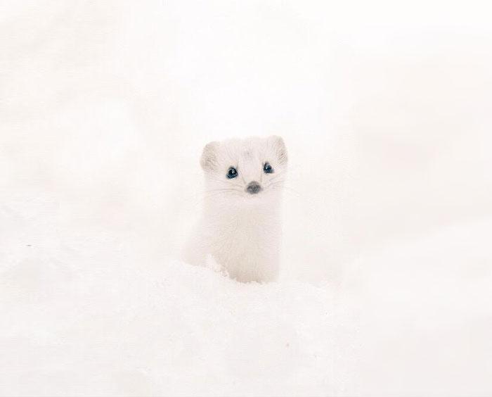 Cute-жовтня-Хоккайдо езо-Японія-34