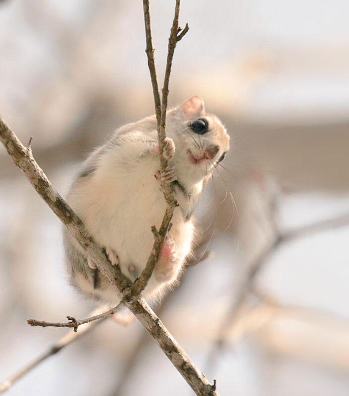 cute-animals-hokkaido-ezo-japan-4