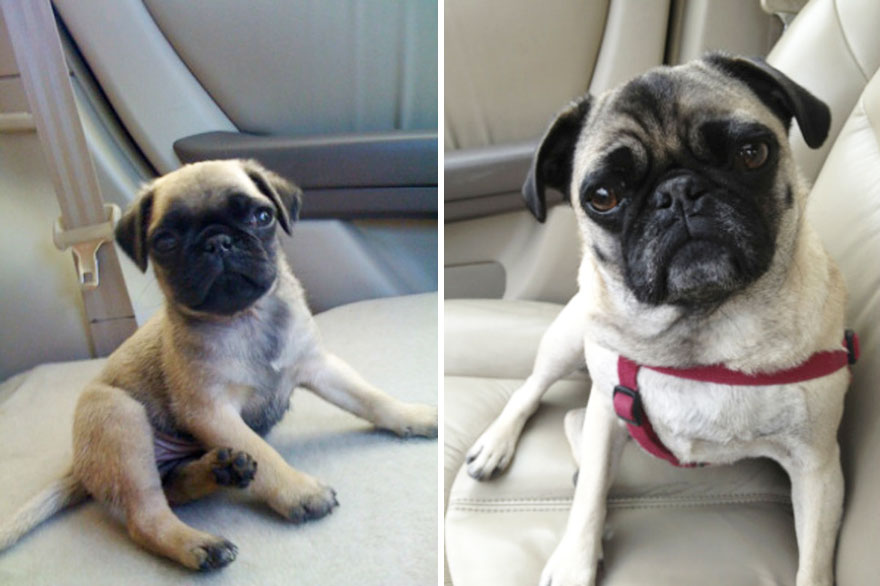 Meet Gracie - Then And Now