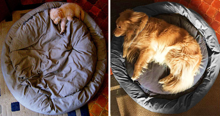22+ Before & After Photos Of Dogs Growing Up (Part II)
