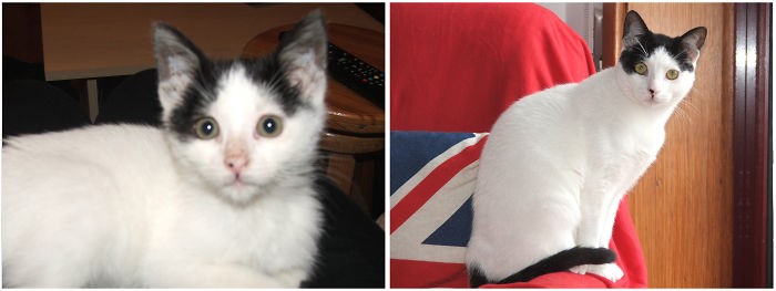 """Ezio, The """"assassin"""", One Month And A Half And A Year And A Half :)"""