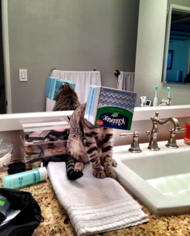 I Hear My Cat Crying In The Bathroom, Walking In, I See This