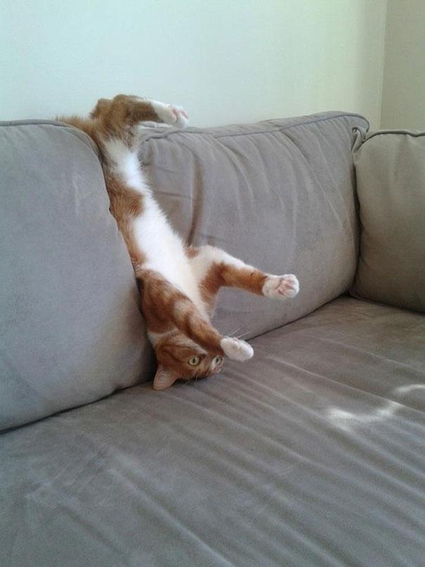 osećaj u slici,tonu,stihu... - Page 2 Funny-cat-fails-19__605