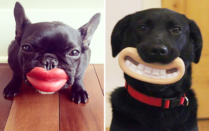 15+ Dogs That Have No Idea How Silly They Look With Their Toys