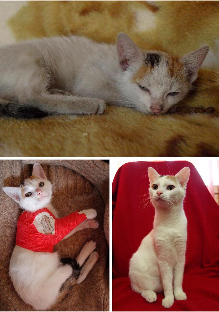 Soft Kitty Warm Kitty Little Ball Of Fur, Happy Kitty, Sleepy Kitty, Purr Purr Purr
