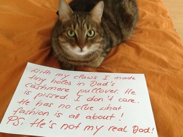 20 Asshole Cats Being Shamed For Their Crimes Bored Panda