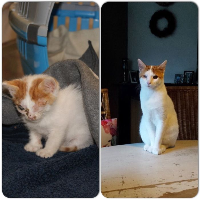 My Cat Ilja Was Abandoned And Rescued. He's One Year Old Now And Very Happy In His Forever Home.