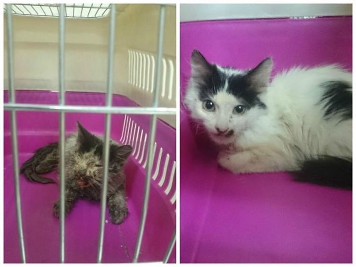 She Was Sick And Dying My Friend Helped Her And Took Her To The Vet And Now Here She Is
