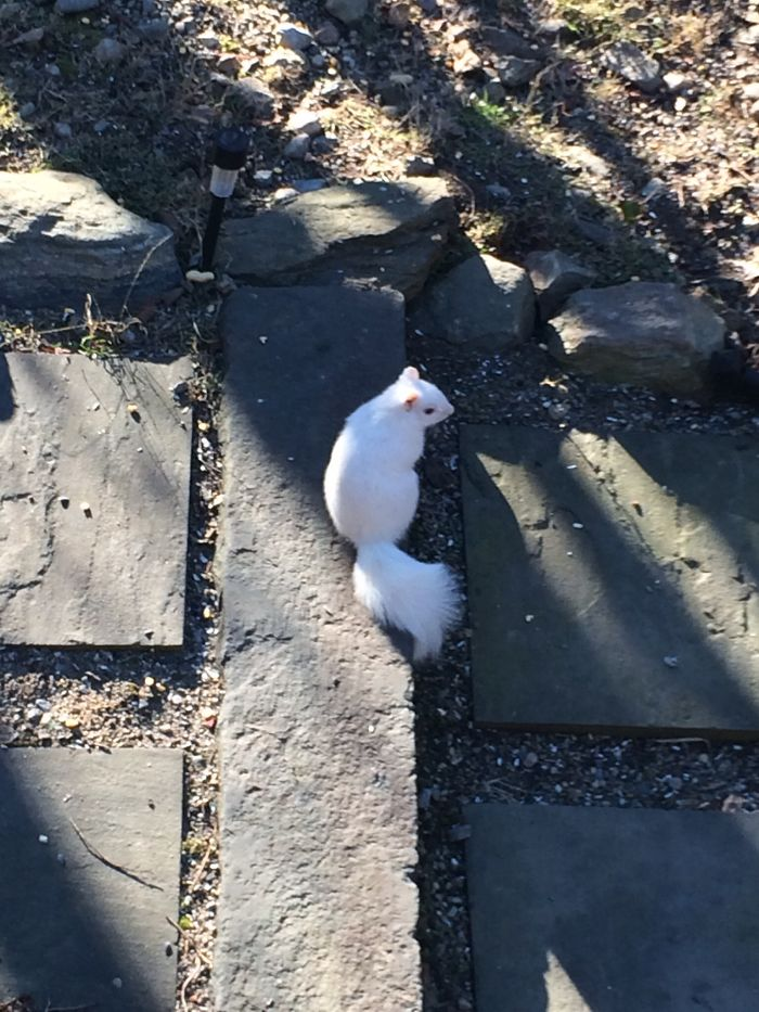 Ghost Squirrel