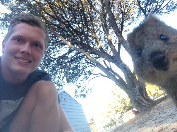 Hey Quokka, Come To My Side! ;-)