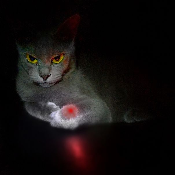 Revenge For The Red Dot