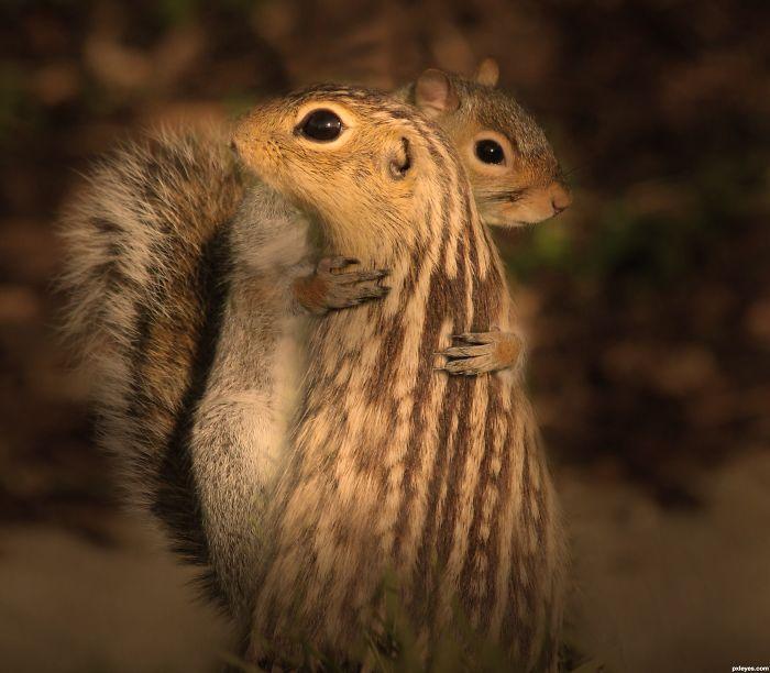 Squirrels Hugging