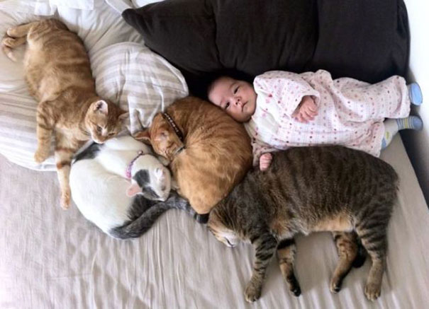 Baby With Cats