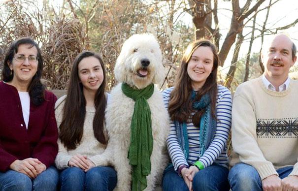 Like Family Like Dog
