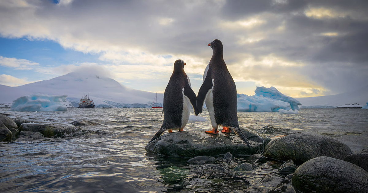 Penguins bowed in mourning after the deaths of their