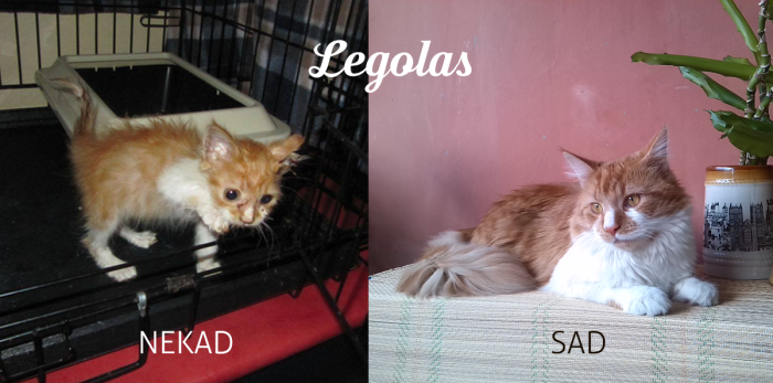 Legolas, When He Was Rescued From The Street And One Year Later :) Real Elf :)