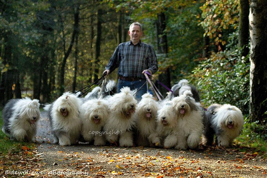 old-english-sheepdog-dog-sisters-sophie-sarah-cees-bol-35