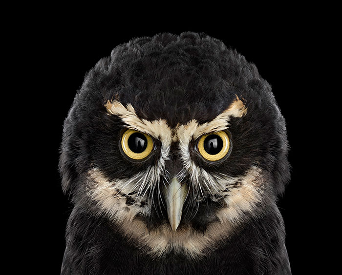Keepers Of Wisdom: I Explore The Mystical Beauty Of Owls