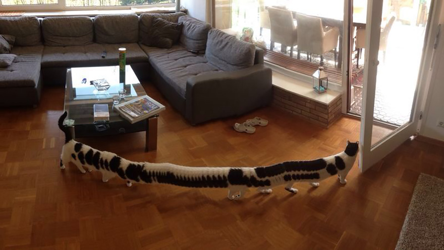 CAT-erpillar: Guy Was Taking Panoramic Photo When His Cat Decided To Walk Through