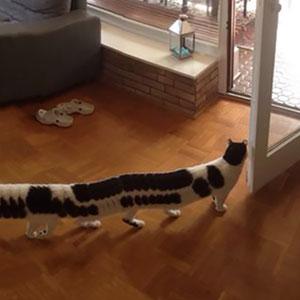 CAT-erpillar: Guy Was Taking Panoramic Photo When His Cat Decided To Walk Through