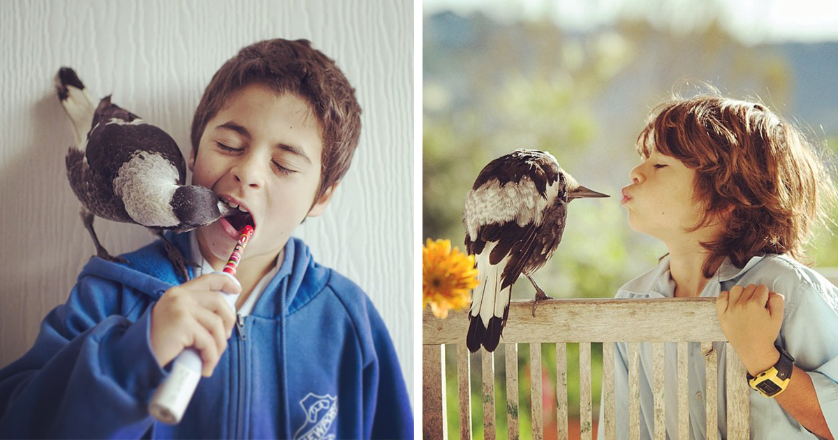 Rescued Magpie Becomes Lifelong Friend With The Family That Saved Her Life