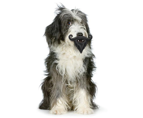 Moustache Toy For Dogs
