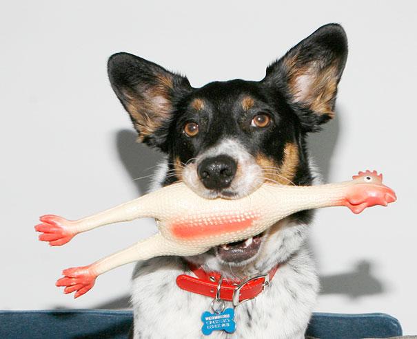 Chicken Dog Toy