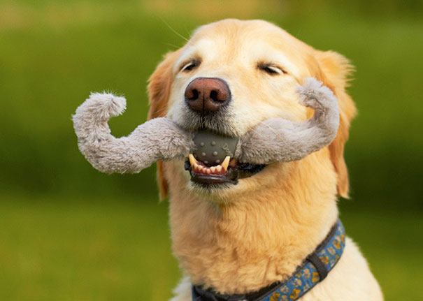 Dog With Mustache Toy