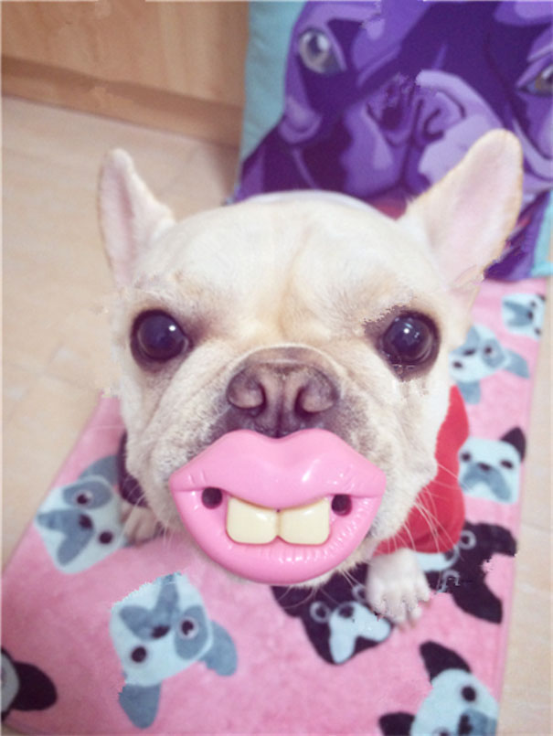 Pink Lips And Teeth Pet Toy