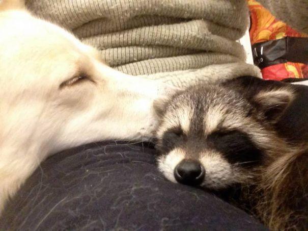 Georgia And Reggie Having A Nap